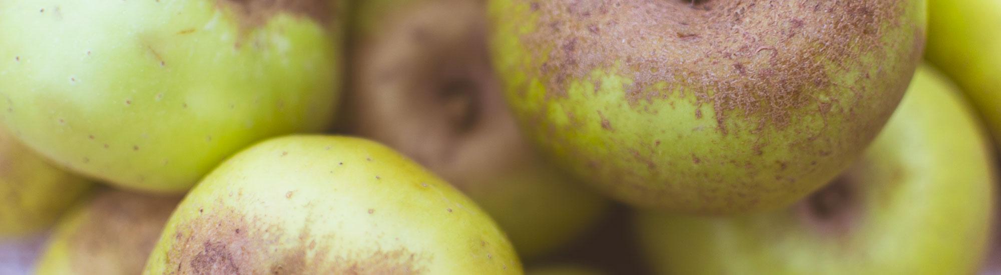 Manzanas para sidra